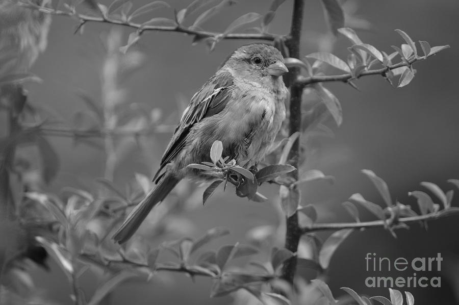Bird Photograph - Pensive Rest by Photos  By Zulma