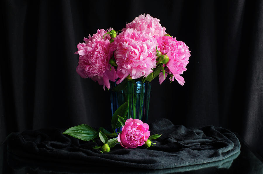 Peonies Photograph - Peonies - Beauty the Brave by Wendy Blomseth