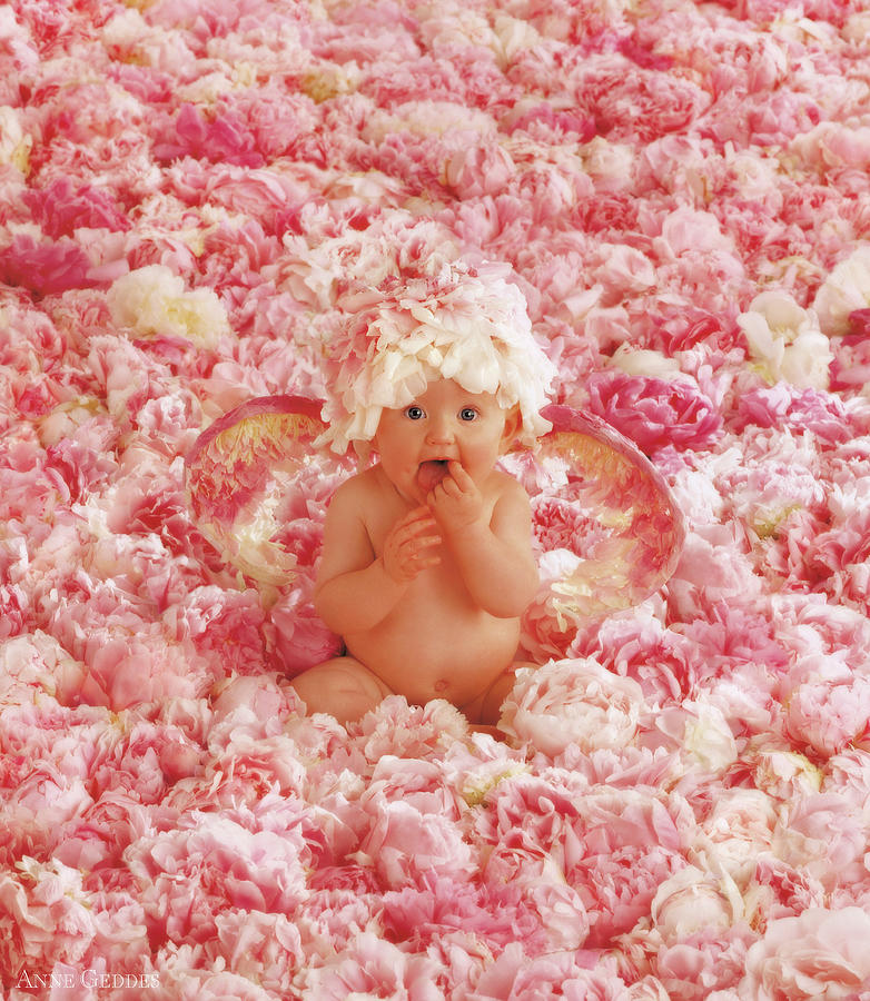 Angel Photograph - Peony Angel by Anne Geddes
