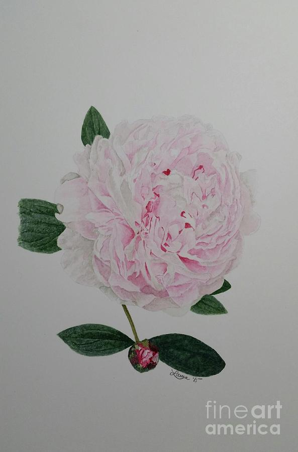 Flower Painting - Peony by Laura Banister