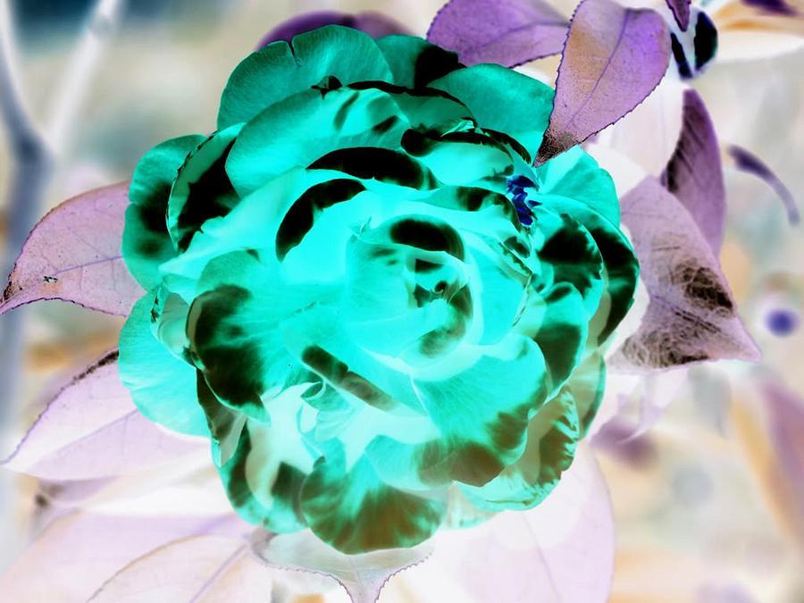 Peony Digital Art by Robert Martin