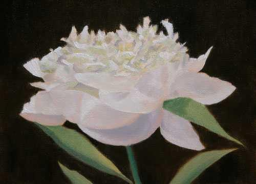 White Painting - Peony by Thaw Malin III