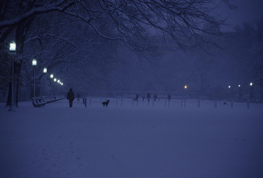 Washington Photograph - People Walk Their Dogs by Stacy Gold
