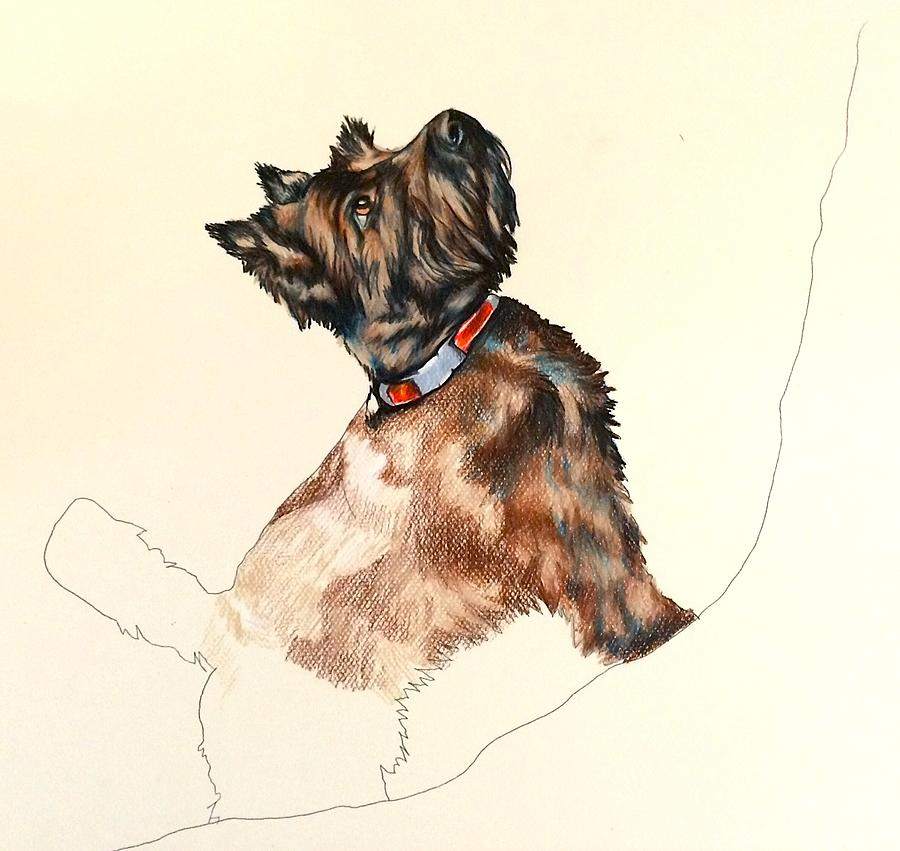 Pepper Drawing by Carol Meckling