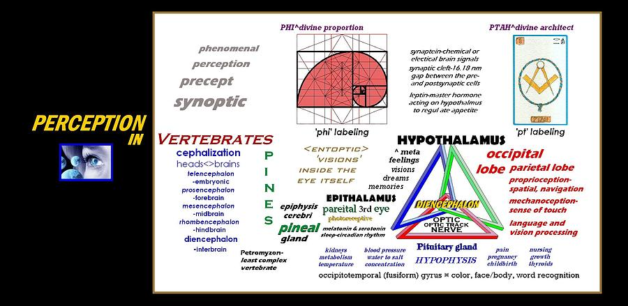 Perception Classification by Peter Hedding
