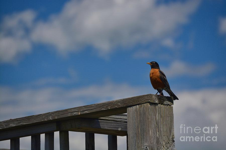 Perch in the Sky by Tammie Miller