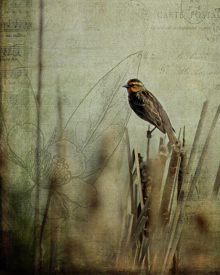 Perched On A Reed Photograph