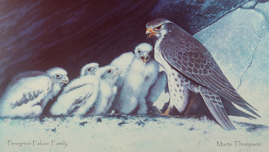 Peregrines Painting - Peregrine Falcon Family by Marte Thompson