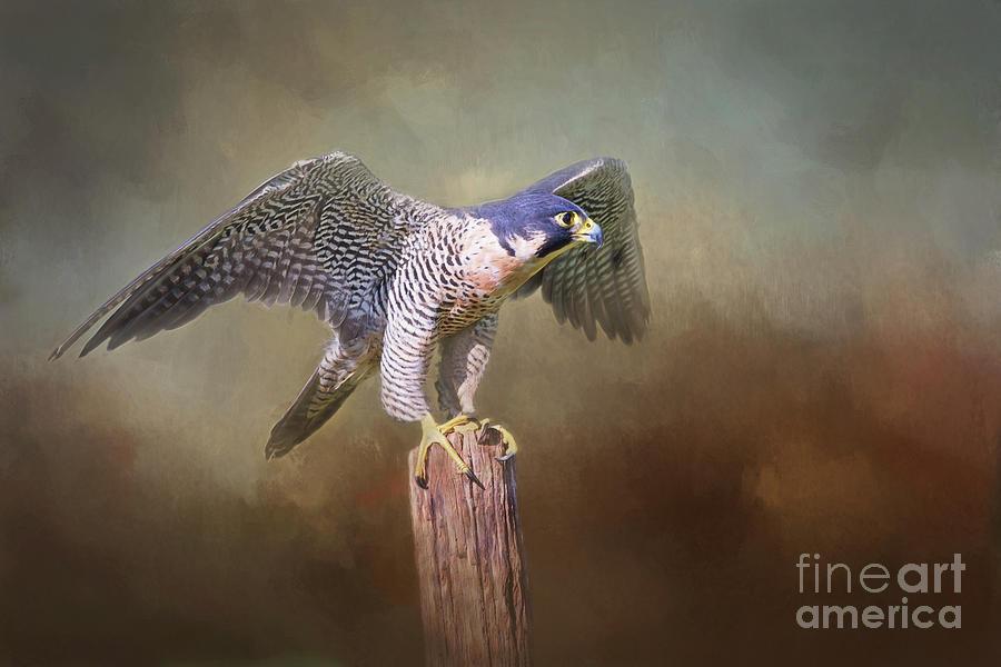 Peregrine Falcon Taking Flight Digital Art By Sharon Mcconnell