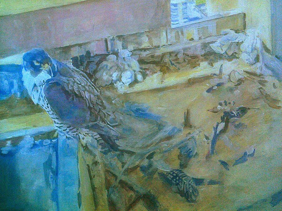 Peregrine Falcons, Asleep On Nest by Rosanne Gartner