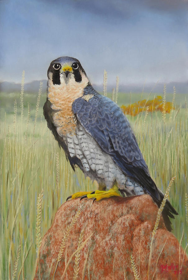 Peregrine Pose by Marcus Moller