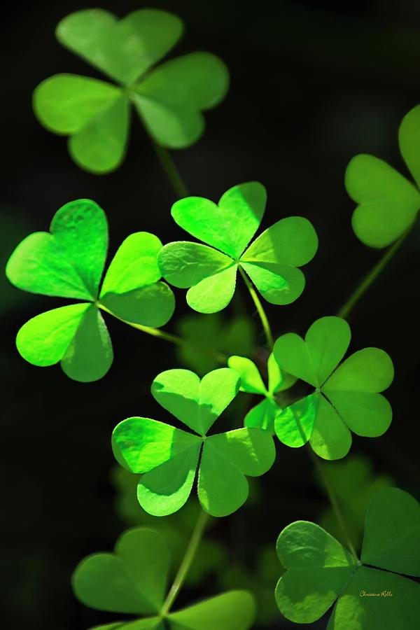 Shamrock Clover Photograph - Perfect Green Shamrock Clovers by Christina Rollo