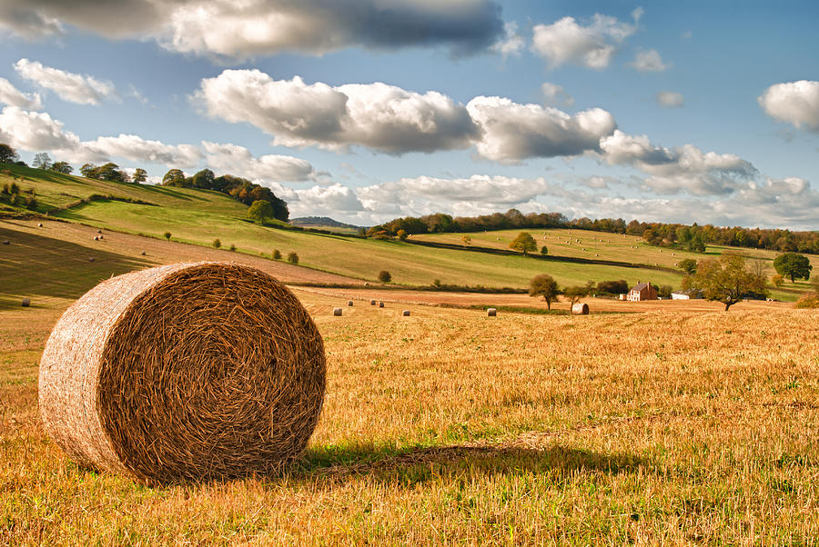Straw Photograph - Perfect Harvest Landscape by Amanda Elwell