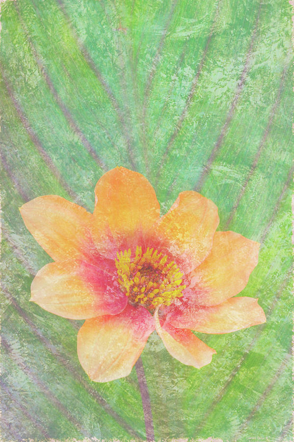 Butterfly Painting - Perfect Peach by JQ Licensing