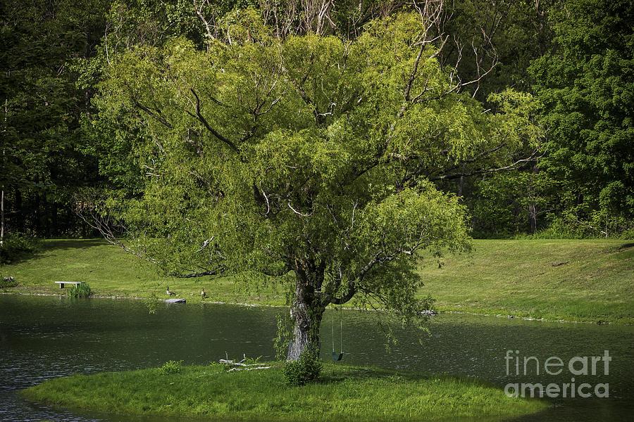 Catskills Photograph - Perfect Tree Swing by DAC Photo