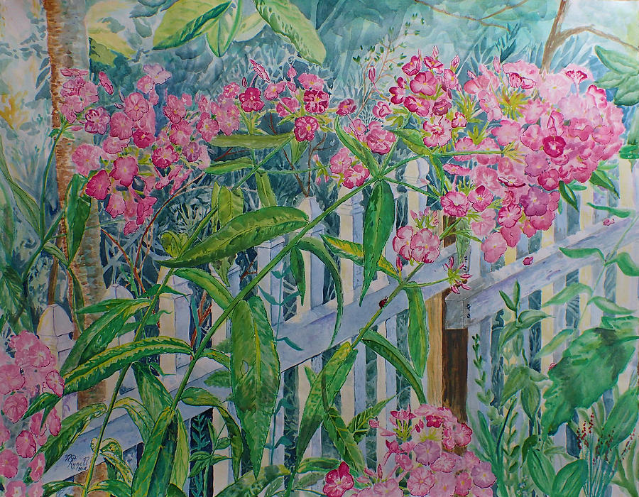 Flower Painting - Perky Pink Phlox in a Dahlonega Garden by Nicole Angell
