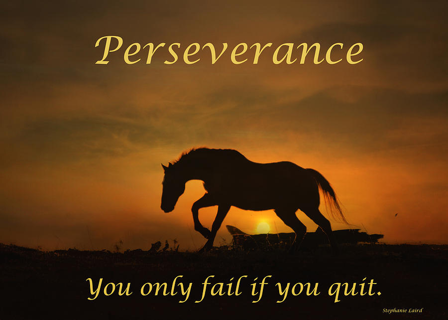 perseverance motivational horse in the sunset photograph by