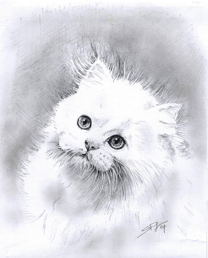 добрый кот перс картинки черно-белые здания старинные