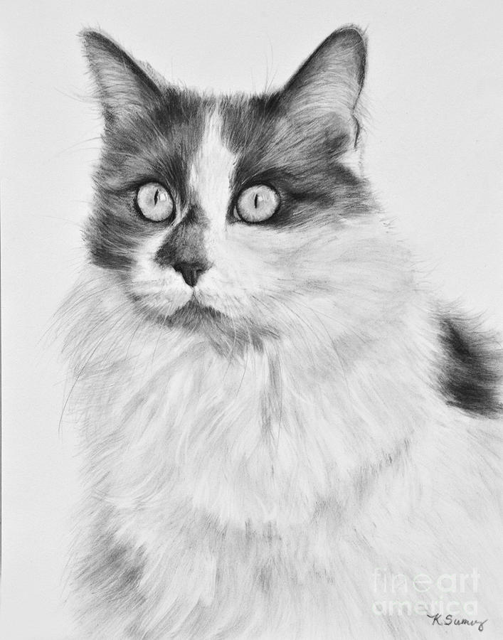 Pet Cat Drawing Olivia by Kate Sumners
