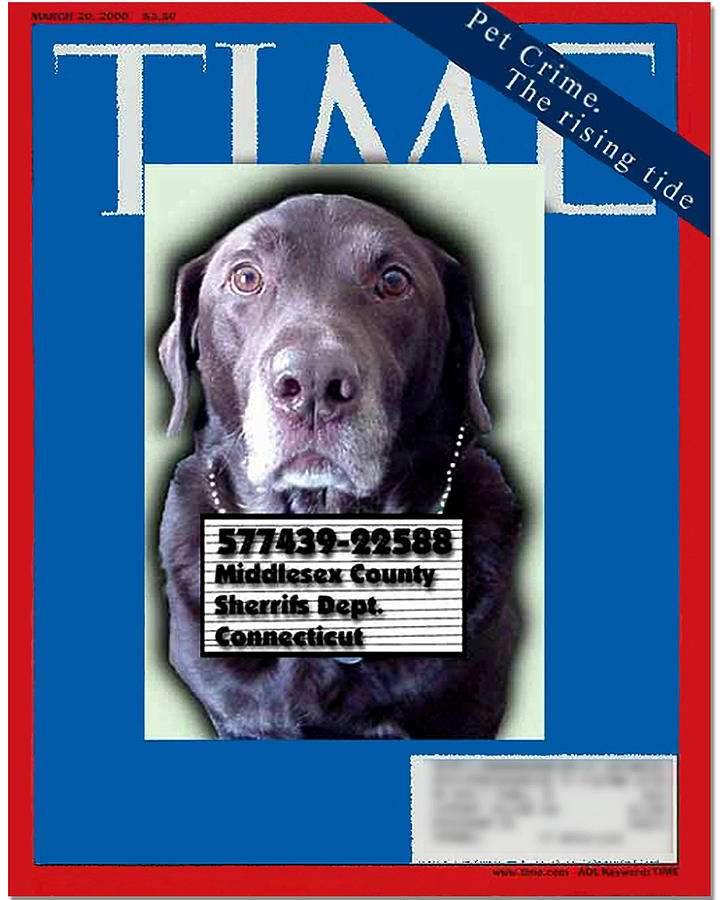 Magazine Photograph - Pet Crime by Ross Powell