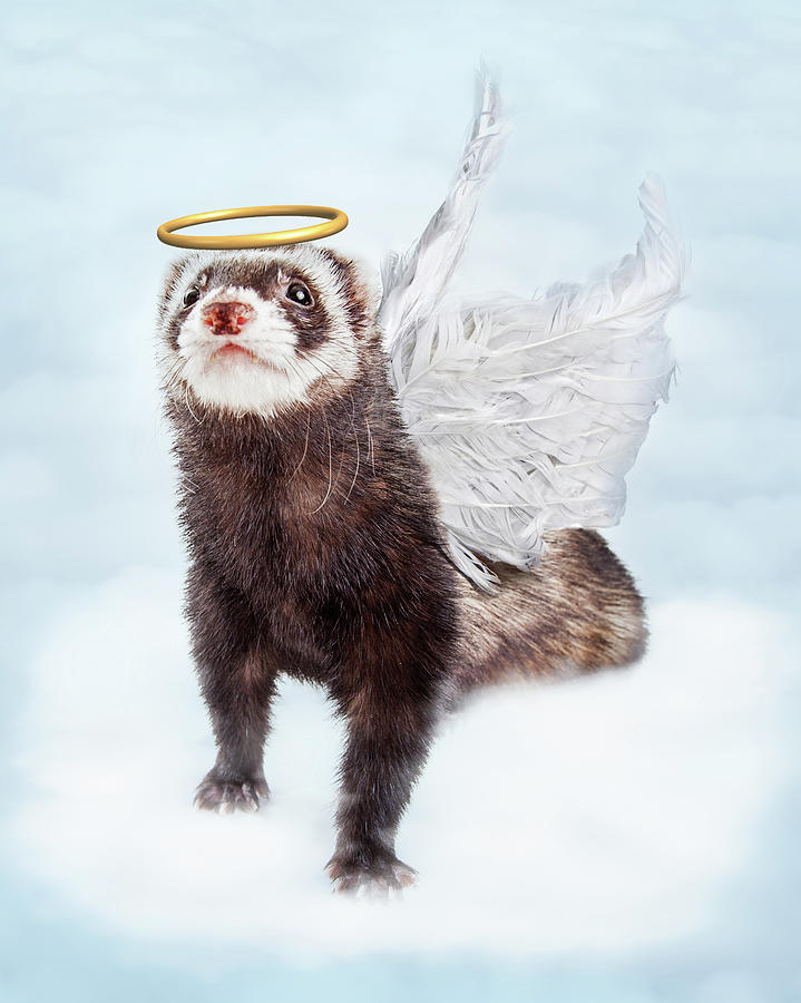 Pet Ferret Angel In Clouds Photograph