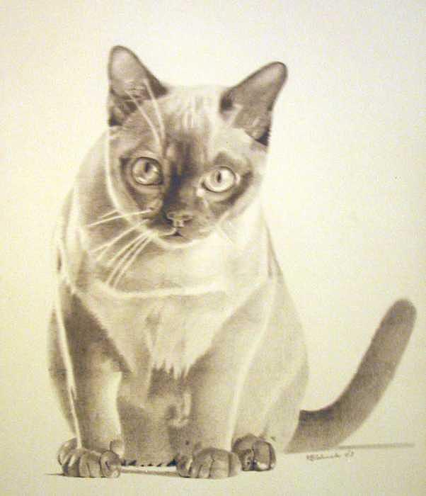 Pet Impressions- Cat Black and White Drawing by Kyle Adamache