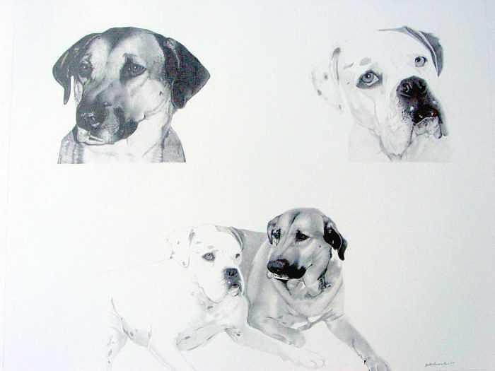Dogs Drawing - Pet Impressions- Clients Dogs by Kyle Adamache