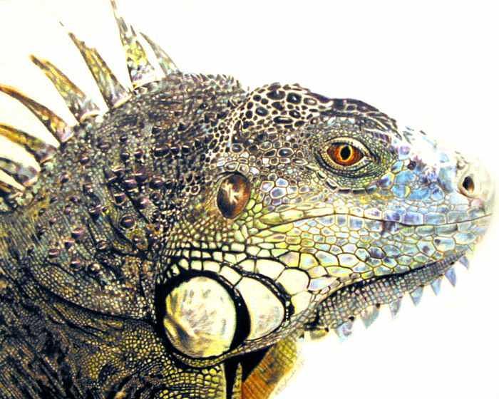 Pet Impressions-Iguana Painting by Kyle Adamache