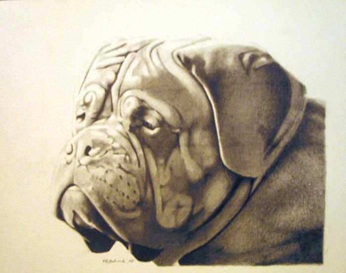Dog Drawing - Pet Impressions-mastiff by Kyle Adamache