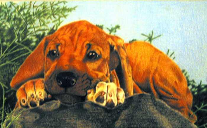 Dog Painting - Pet Impressions-Rhodesian Ridgeback Pup by Kyle Adamache