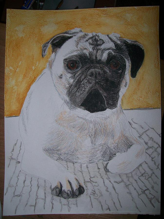Pug Painting - Pet Portrait Pug Dog Original Watercolor Memorial By Pigatopia by Shannon Ivins