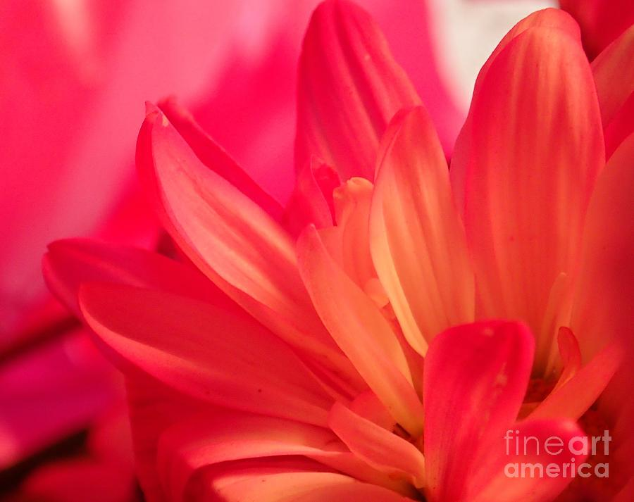 Petal Abstract by Christina Verdgeline