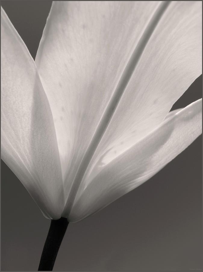 Flower Photograph - Petal Power by Joseph Hedaya