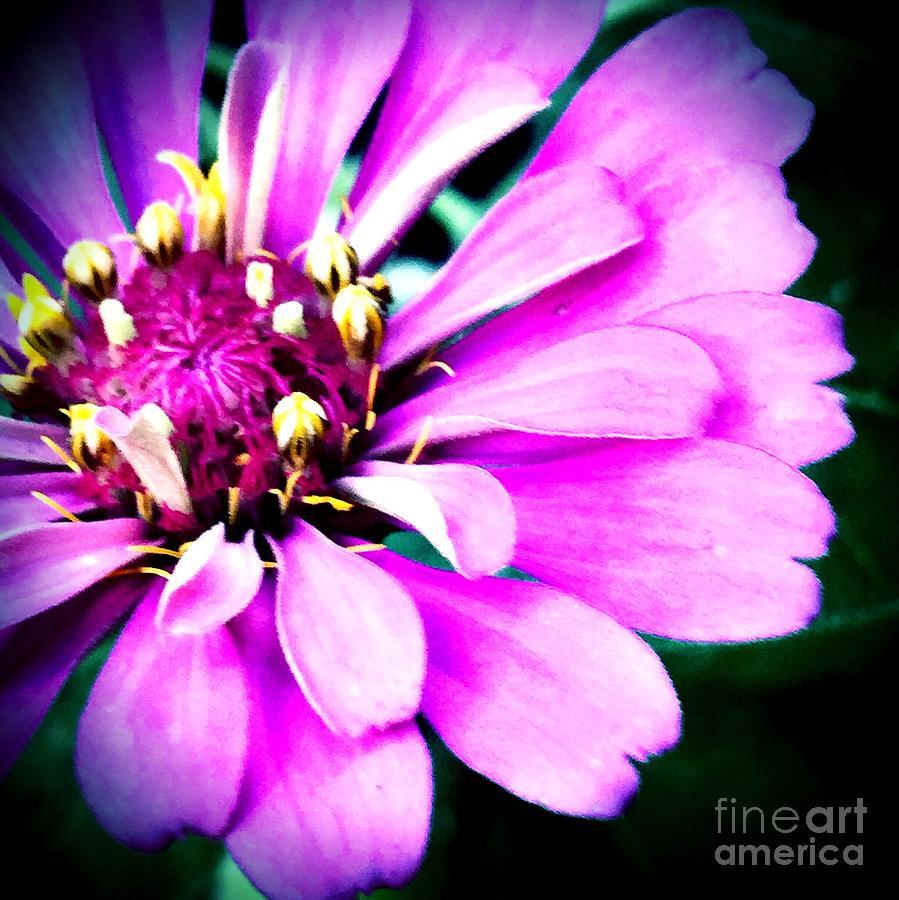 Petal power by Vonda Lawson-Rosa