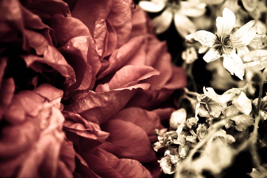 Flower Photograph - Petal Rift by Danielle Silveira