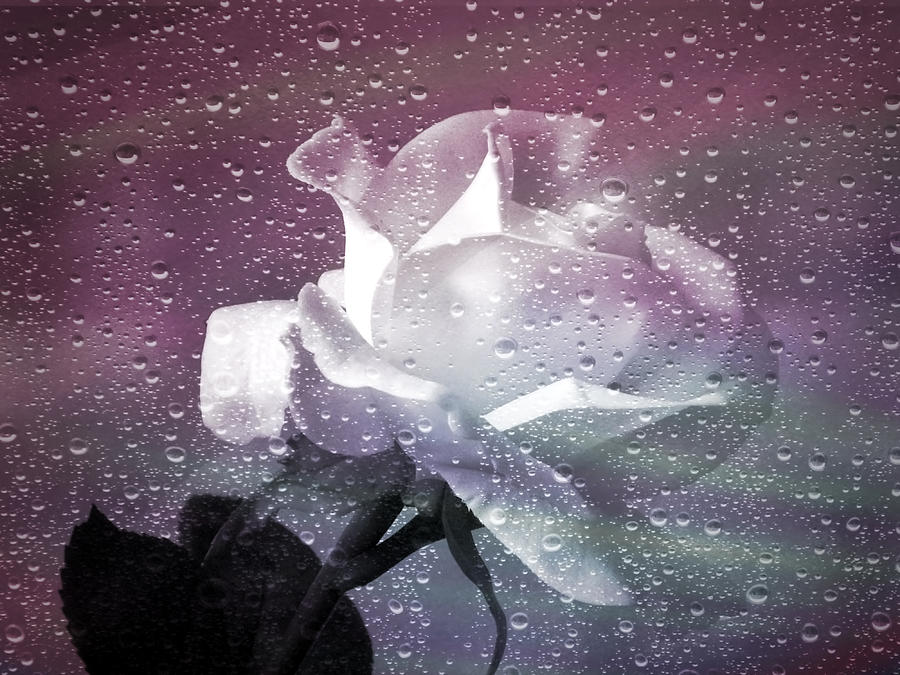 Rose Photograph - Petals And Drops by Julie Palencia