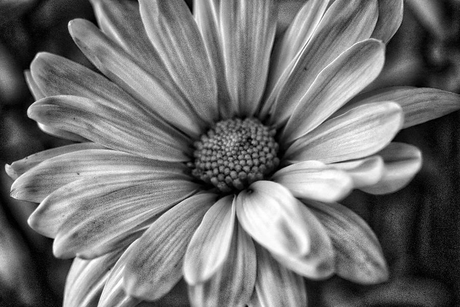 Petals BW by Linda James
