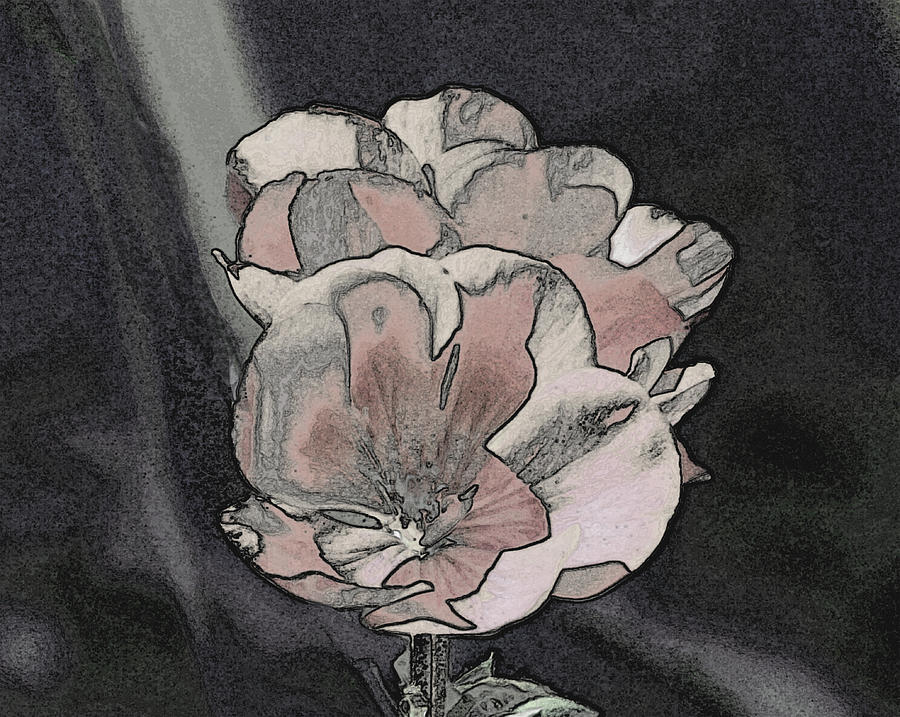 Petals in Pink and Grey by Stephanie Grant