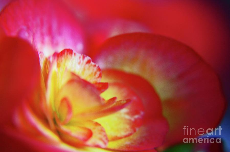 Petals Of A Flower Photograph