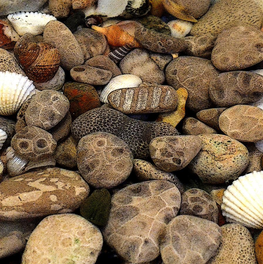 Stone Photograph - Petoskey Stones With Shells L by Michelle Calkins