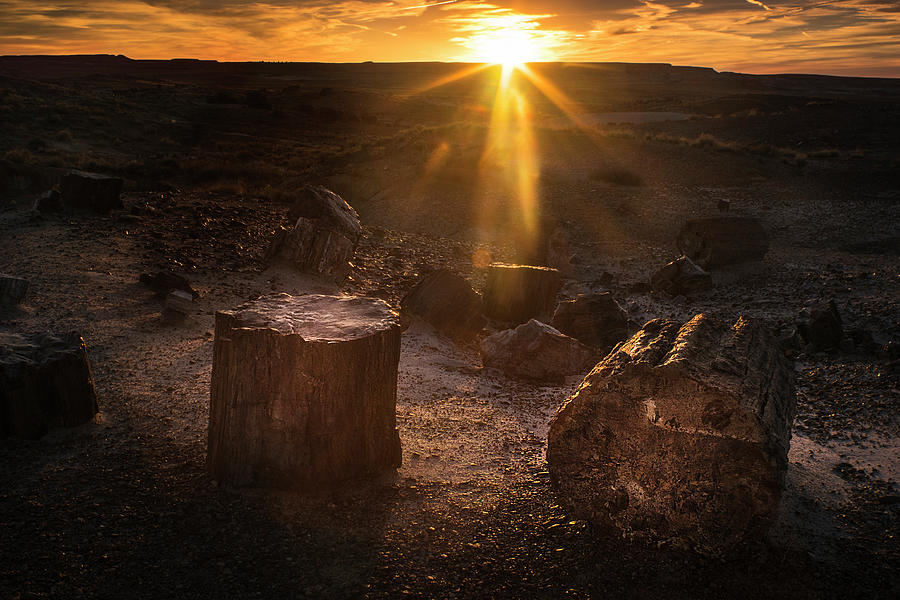 Petrified Forest Photograph