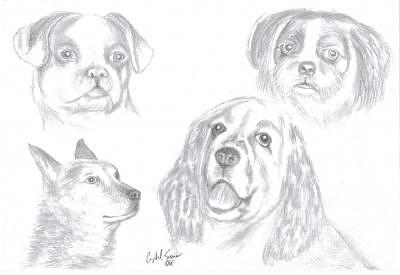 Pet Portrait Drawing - Pets by Crystal Sons