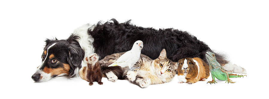 Animal Photograph - Pets Together On White Banner by Susan Schmitz
