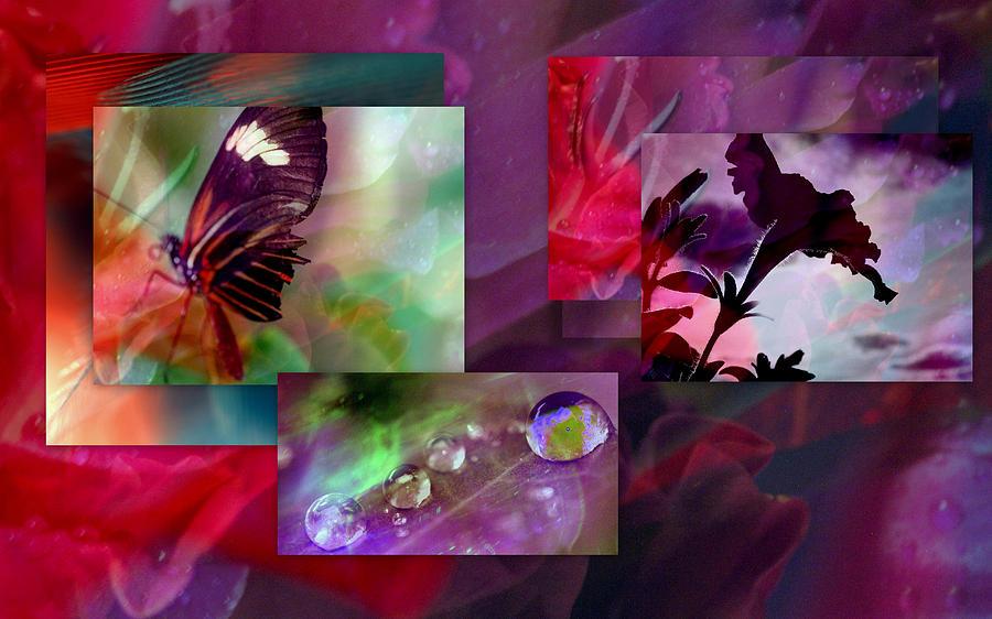 Petunia Photograph - Petunia Collage by Irma BACKELANT GALLERIES