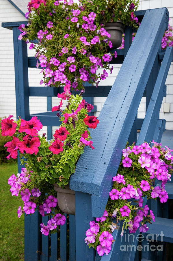 Petunias on blue porch by Elena Elisseeva