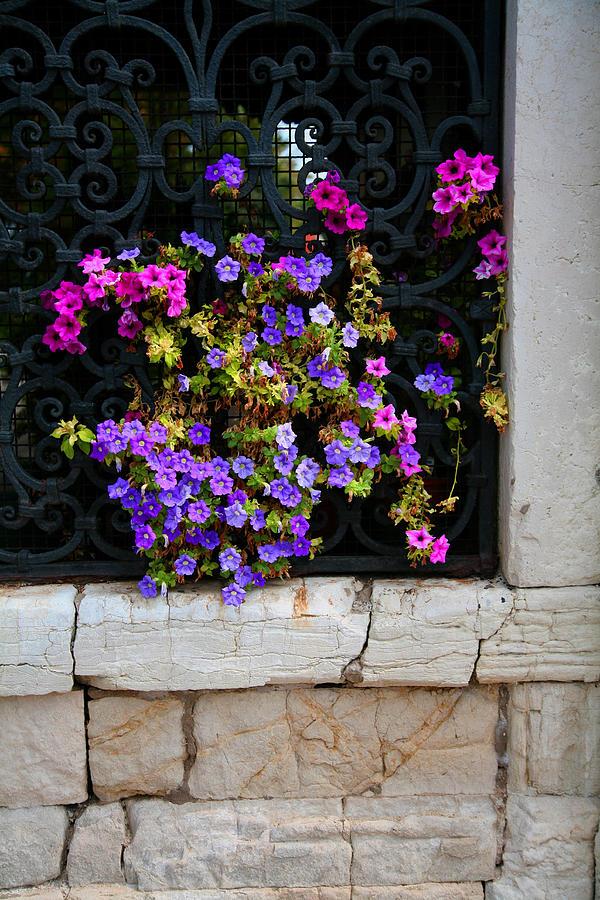 Petunias Photograph - Petunias Through Wrought Iron Window by Donna Corless