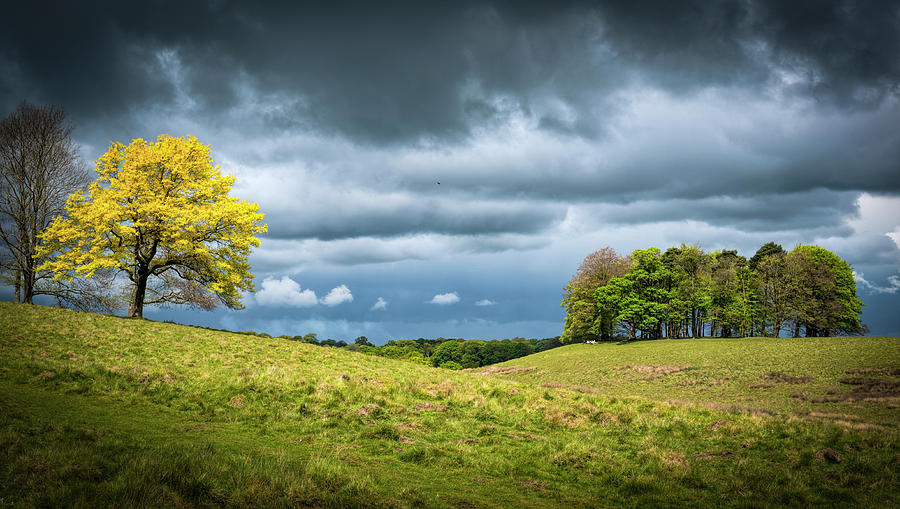 Petworth Photograph - Petworth Dark And Light by Michael Hope