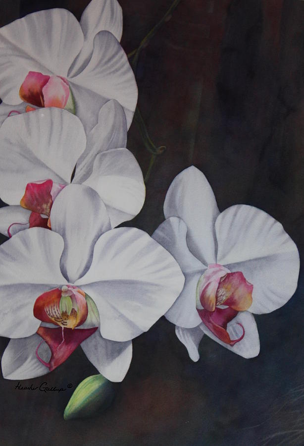 Phalaenopsis Beauty Painting by Heather Gallup