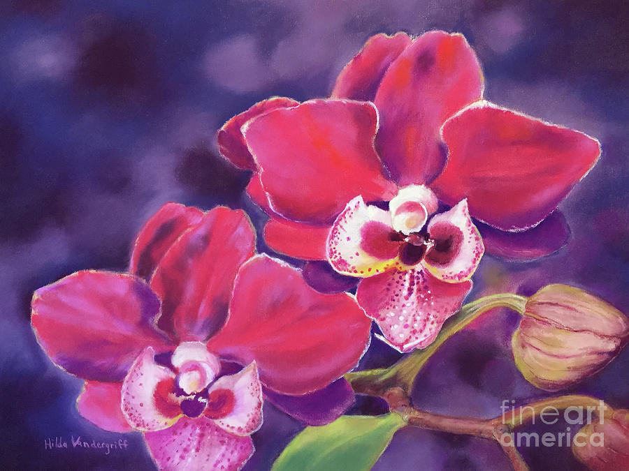 Phalaenopsis Orchid by Hilda Vandergriff
