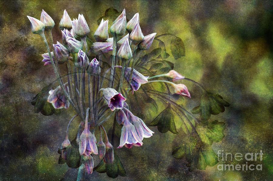 Beauty In Nature Photograph - Phantom Bells by Venetta Archer